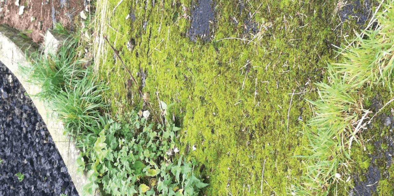 moss before treatment