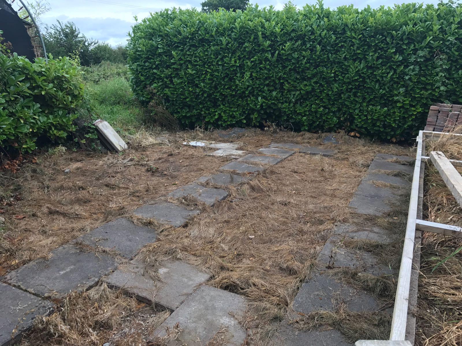 weeds in back garden after using foamstream machine
