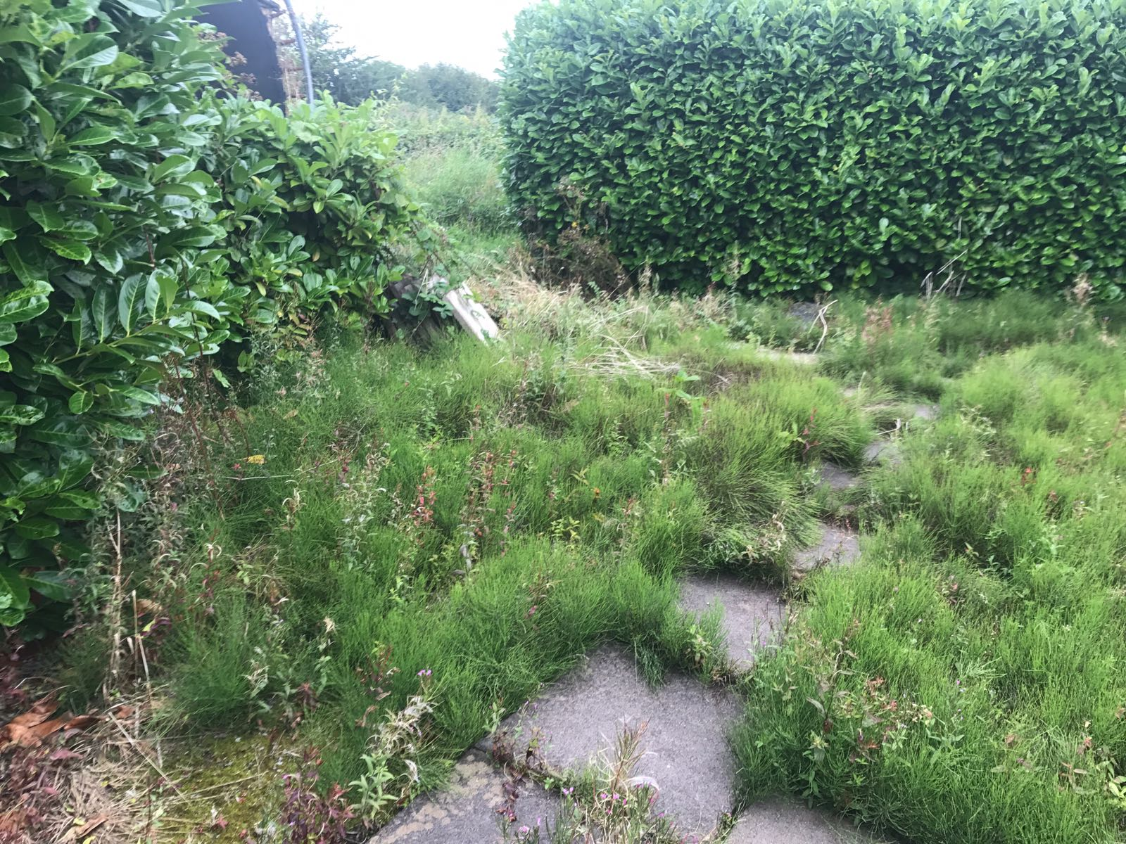 weeds in back garden before using foamstream machine